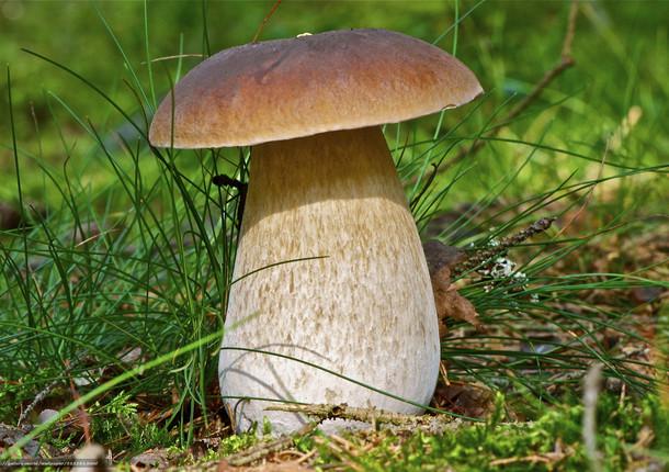 В лесах под Томском появились белые грибы